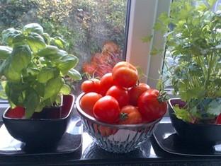 ripe-tomatoes_thumb (2)
