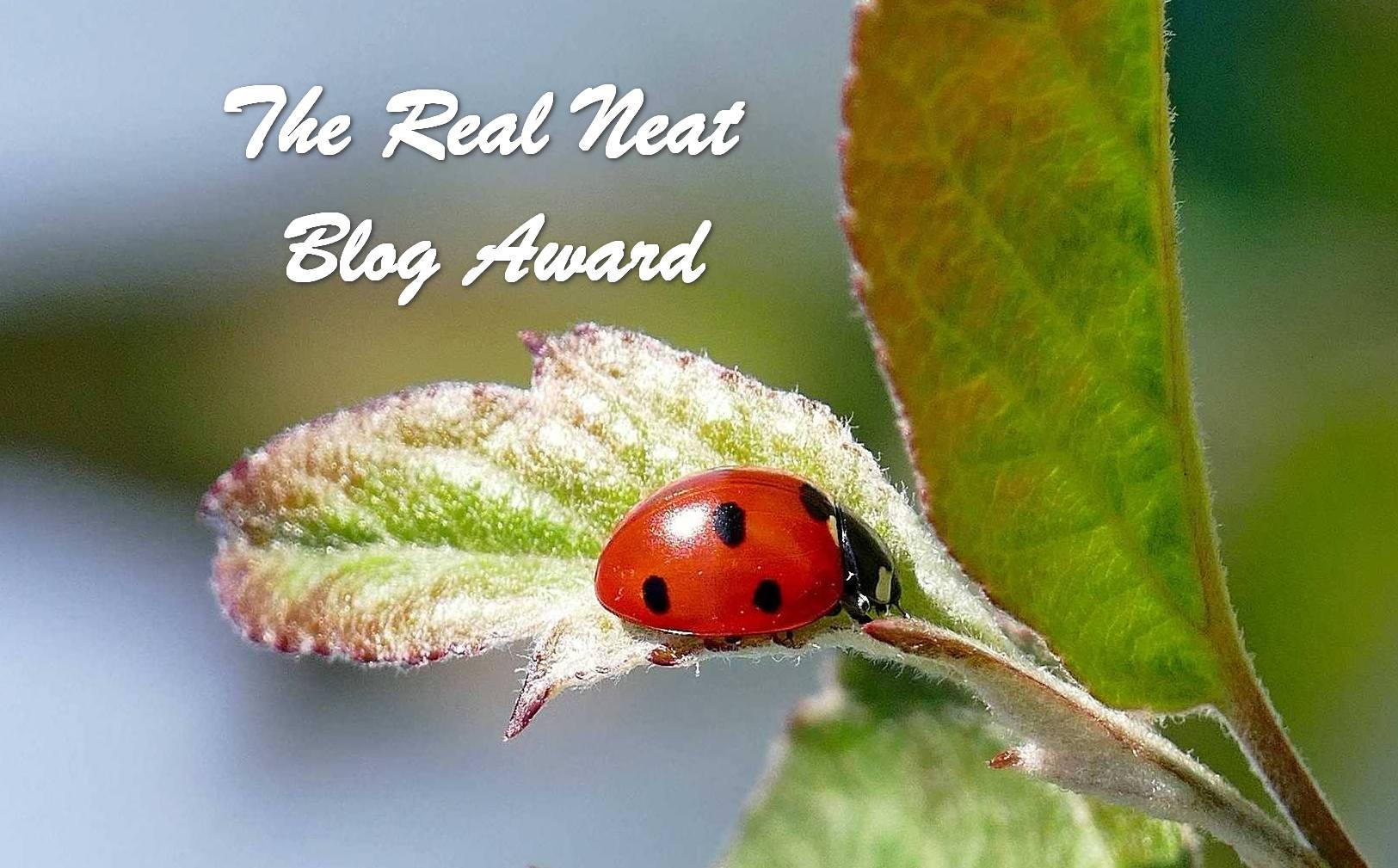Real Neat Award