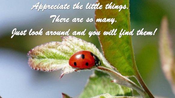 SS Ladybug